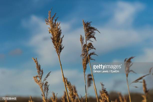 Low Angle View Of Blades Of Grass