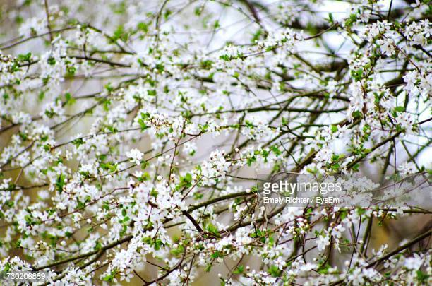 Low Angle View Of Blooming Tree