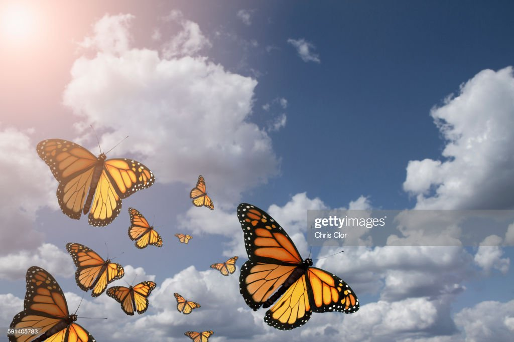 Low angle view of butterflies flying in blue sky