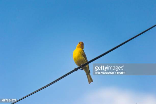 Low Angle View Of Canary Perching On Cable Against Sky