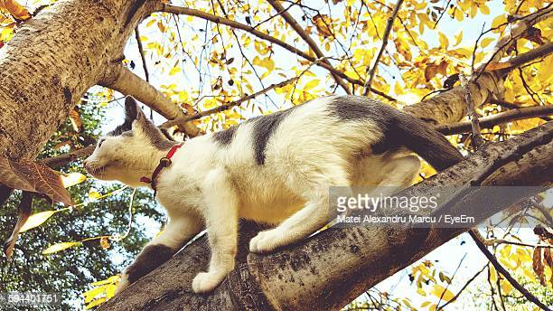 Low Angle View Of Cat Climbing On Tree