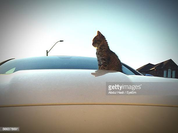 Low Angle View Of Cat Sitting On Car Bonnet Against Clear Sky
