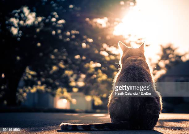 Low Angle View Of Cat Sitting On Street