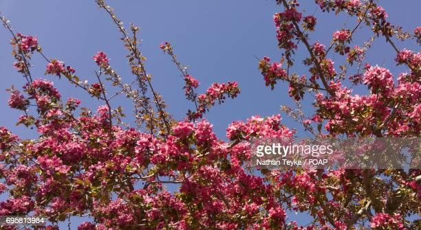 Low angle view of cherry blassom