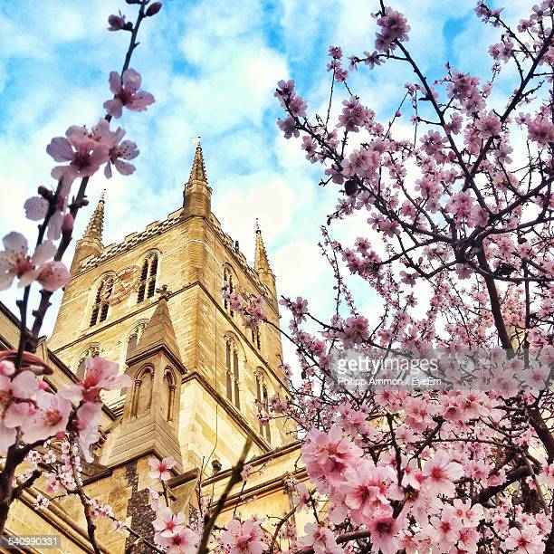 Low Angle View Of Cherry Blossoms And Southwark Cathedral