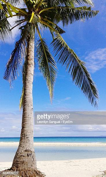 Low Angle View Of Coconut Palm Tree At Beach