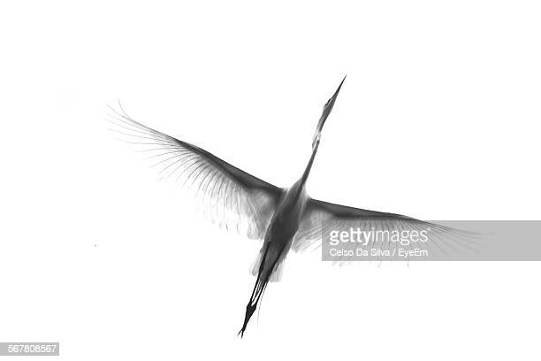 Low Angle View Of Crane Flying In Clear Sky