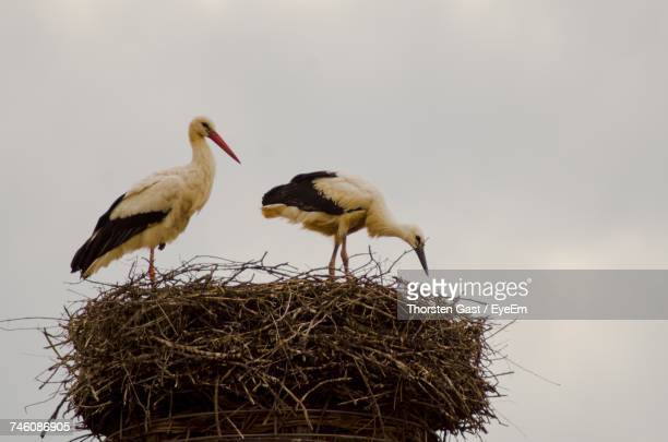 Low Angle View Of Cranes On Nest Against Sky