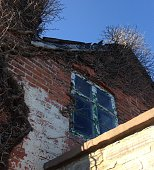 Low Angle View Of Dead Plant On Abandoned House