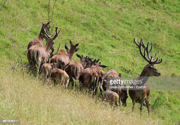 Low Angle View Of Deer On Hillside