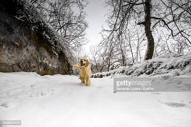 Low Angle View Of Dog Walking On Snow Covered Field During Winter