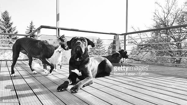 Low Angle View Of Dogs Sitting In Porch On Sunny Day