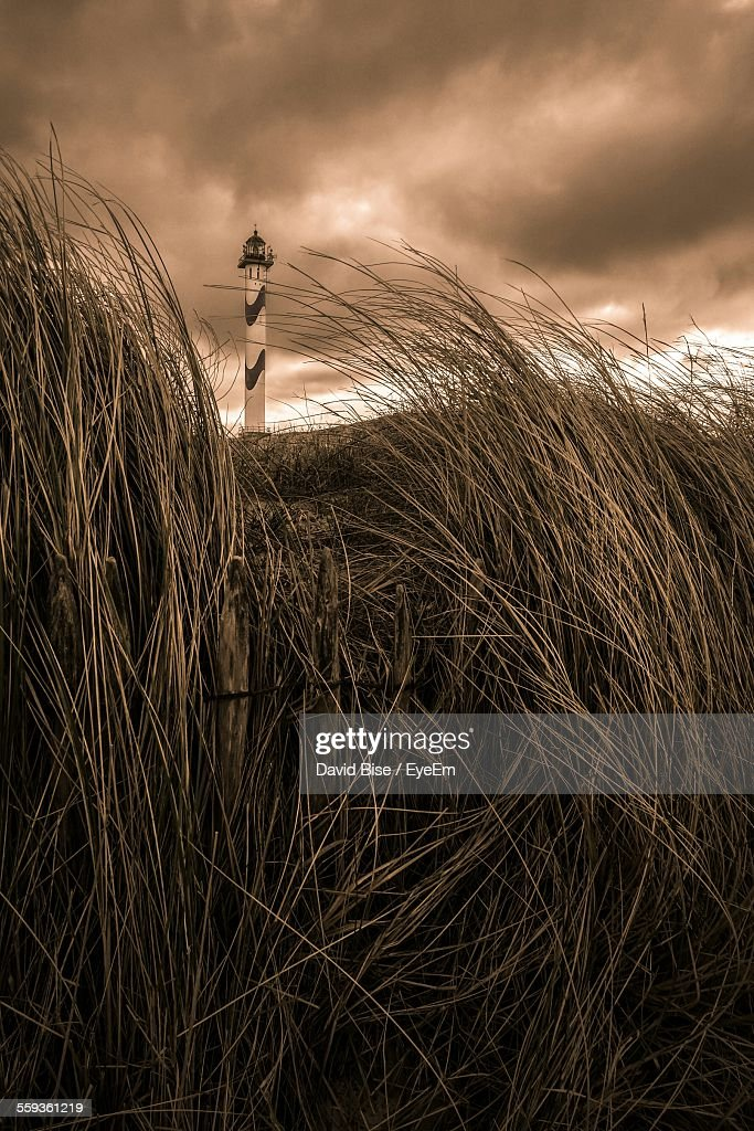 Low Angle View Of Dry Grass Against Cloudy Sky