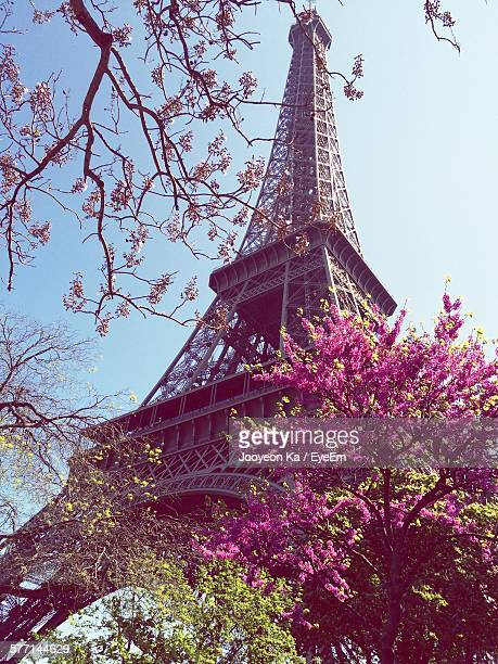 Low Angle View Of Eiffel Tower Amidst Pink Blossom, Paris, France