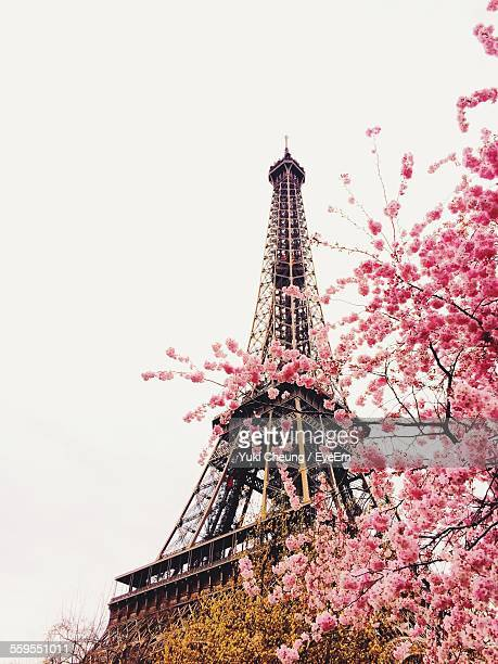 Low Angle View Of Eiffel Tower And Cherry Tree Against Clear Sky