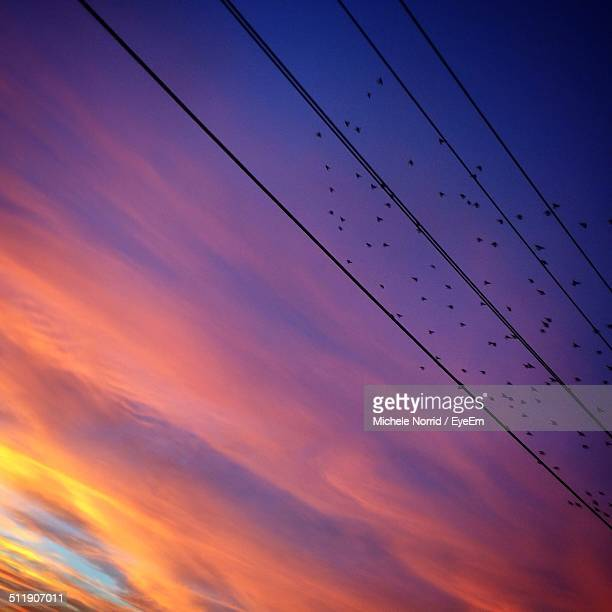 Low angle view of electricity pylon and birds against sky
