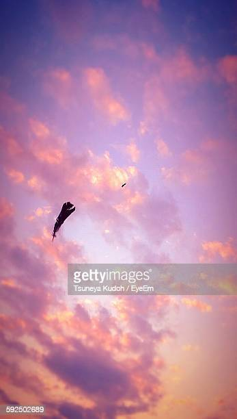 Low Angle View Of Feather And Bird Against Sky