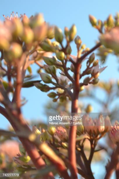 Low Angle View Of Flower Tree Against Sky