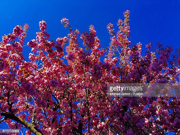 Low Angle View Of Flowers Against Blue Sky