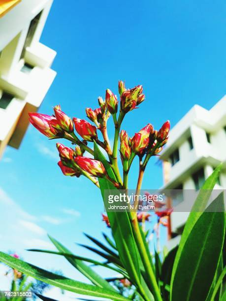 Low Angle View Of Flowers Against Clear Sky