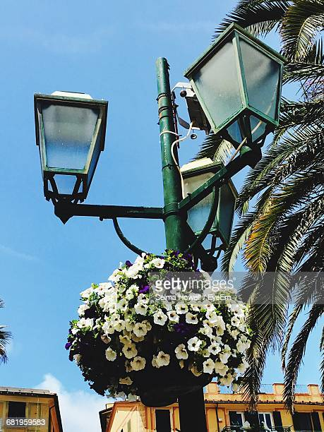 Low Angle View Of Flowers Growing In Pot On Street Light
