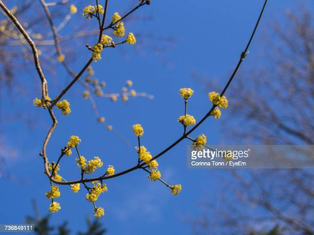 Low Angle View Of Flowers On Branch