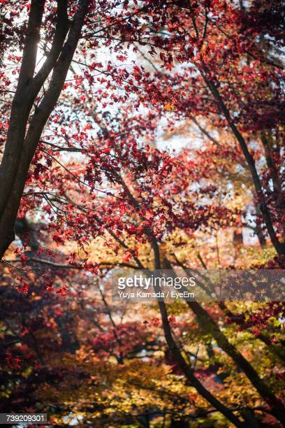 Low Angle View Of Flowers On Tree During Autumn