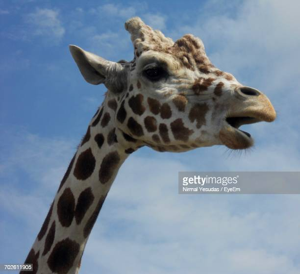 Low Angle View Of Giraffe