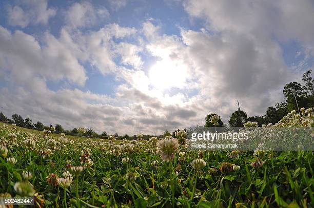 Low angle view of grass and blue sky with clouds