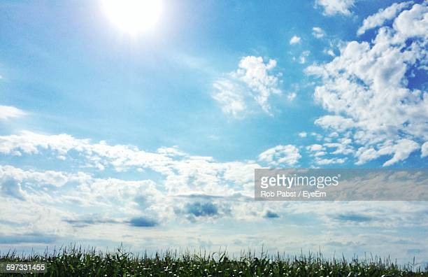 Low Angle View Of Grassy Field Against Sky