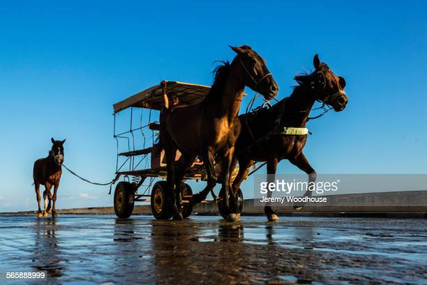 Low angle view of horses pulling cart under blue sky