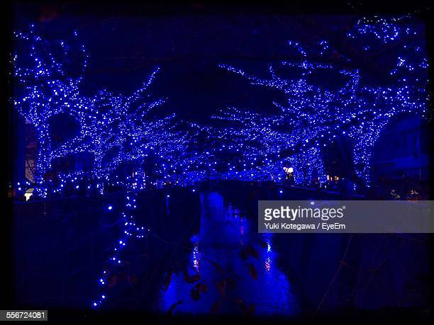 Low Angle View Of Illuminated Decorated Bare Trees Amidst Canal At Night