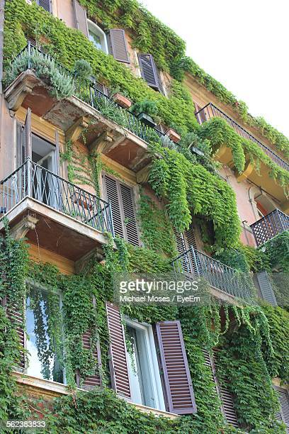 Low Angle View Of Ivy Growing On Old Building
