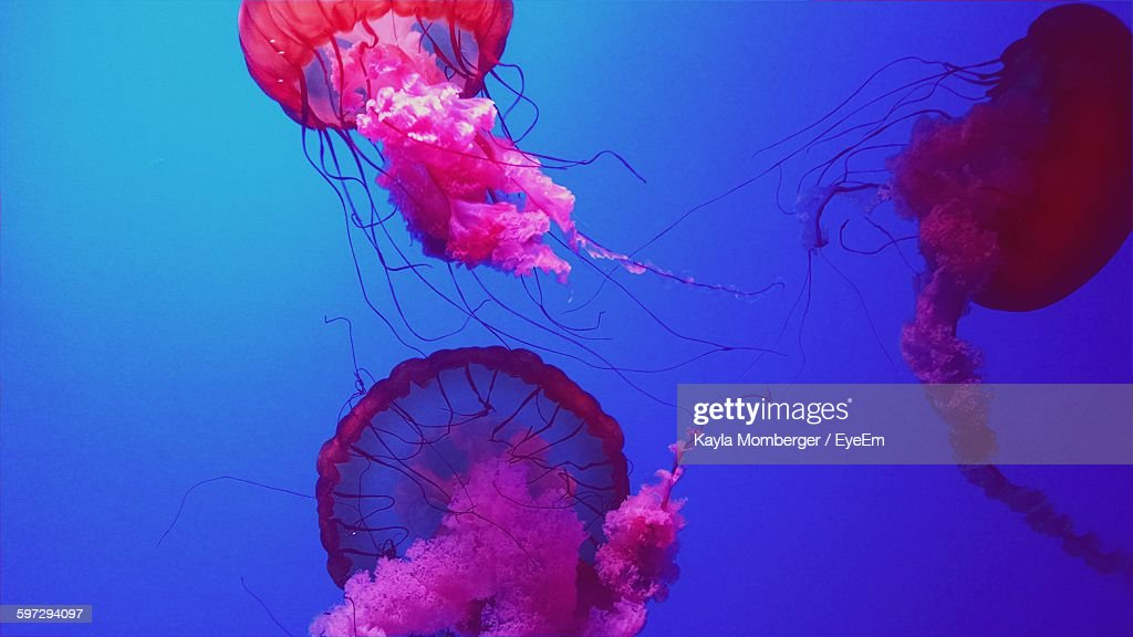 Low Angle View Of Jellyfish In Swimming In Sea