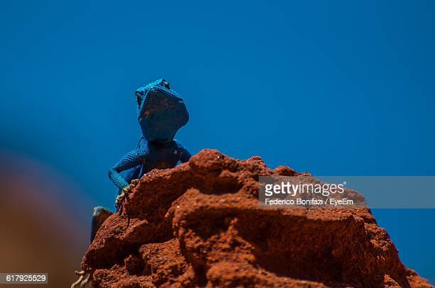 Low Angle View Of Lizard On Rock Against Clear Blue Sky