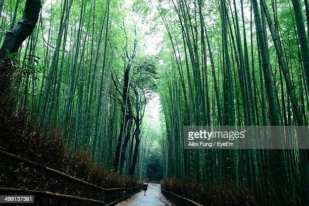 Low angle view of lush trees in the forest