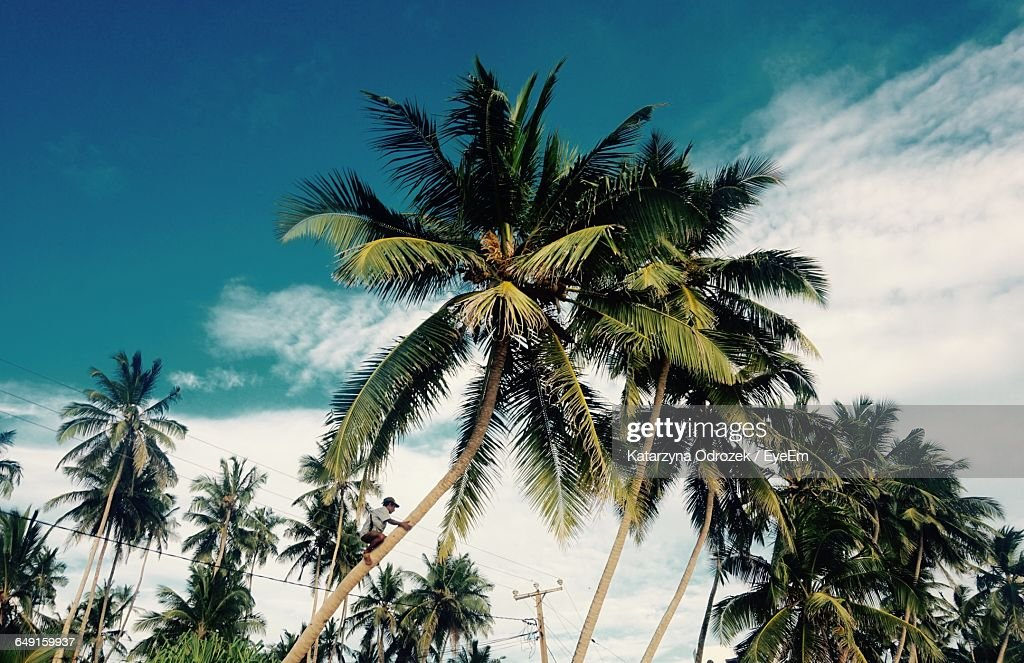 Low Angle View Of Man Climbing Coconut Palm Tree Against Sky