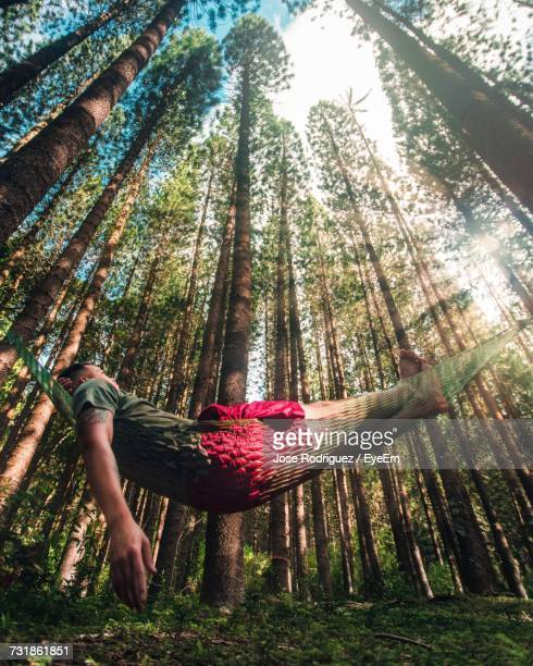 Low Angle View Of Man Relaxing On Hammock In Forest