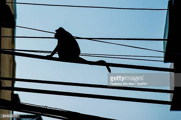 Low Angle View Of Monkey On Cable