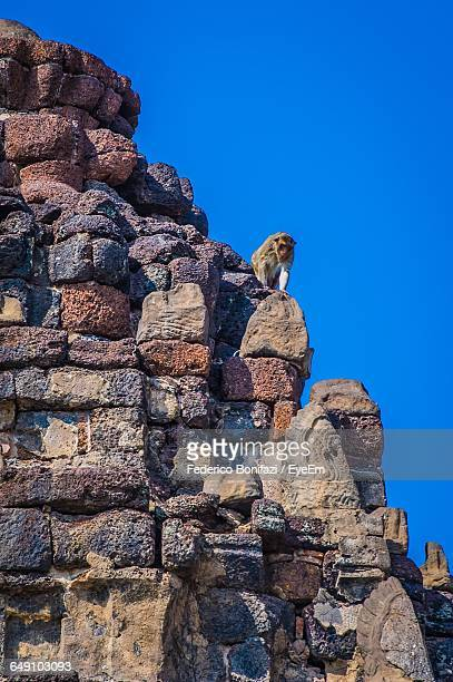 Low Angle View Of Monkey On Rocks Against Clear Blue Sky