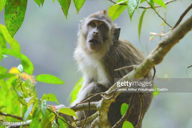 Low Angle View Of Monkey Perching On Tree