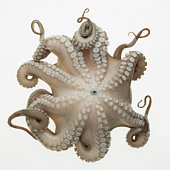 low angle view of octopus