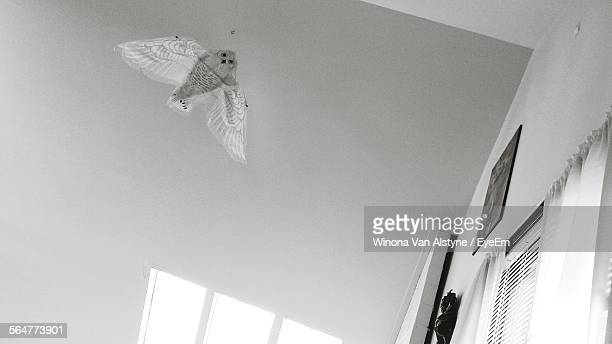 Low Angle View Of Owl Decoration Hanging With Ceiling