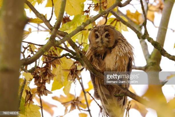 Low Angle View Of Owl Perching On Branch During Autumn