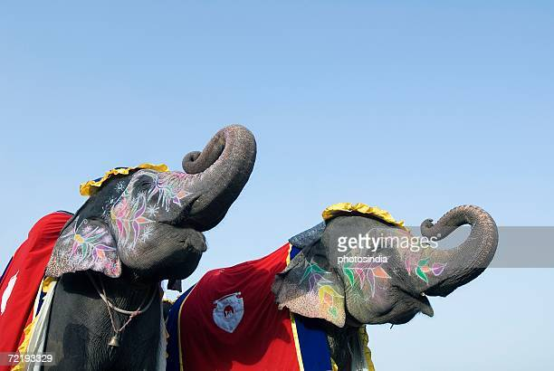 Low angle view of painted elephants blowing their trumpets, Jaipur, Rajasthan, India