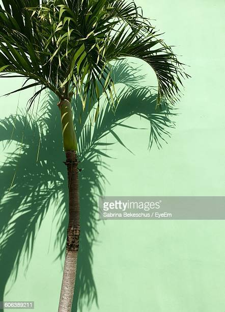 Low Angle View Of Palm Tree Against Green Wall