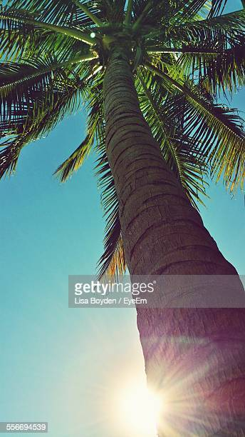 Low Angle View Of Palm Tree At Sunrise