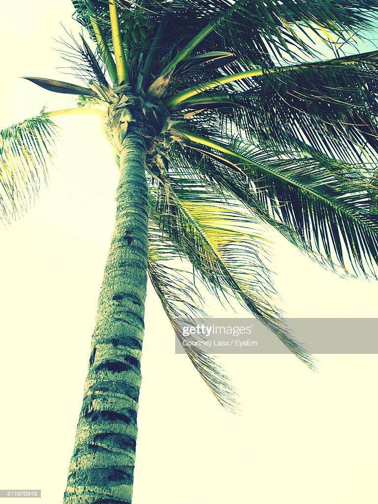 Low angle view of palm tree blowing in wind