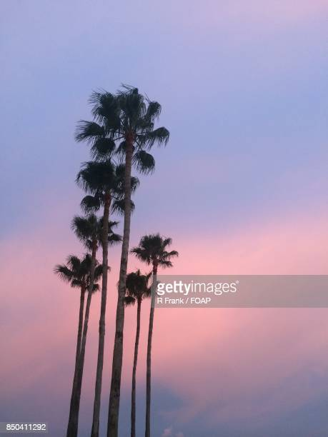 Low angle view of palm tree during sunset