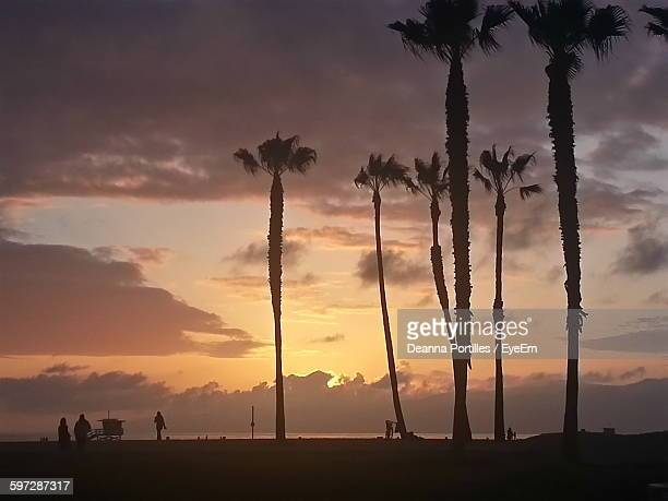 Low Angle View Of Palm Trees Against Cloudy Sky During Sunset